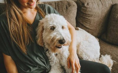 Perfect Pets for Teenagers