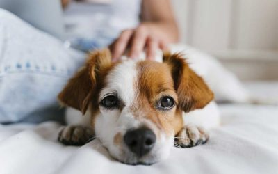 Natural Remedies for Pets